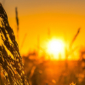Dossier Agroalimentaire