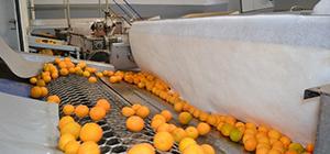 MAROC : Développement des industries agroalimentaires dans le Souss-Massa