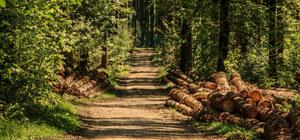 Une filière bois toujours aussi peu productive en France