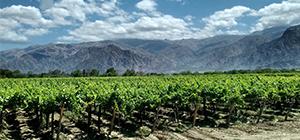 Optimisme des viticulteurs argentins pour l'année 2019