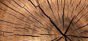 Dynamisme des exportations vietnamiennes de bois